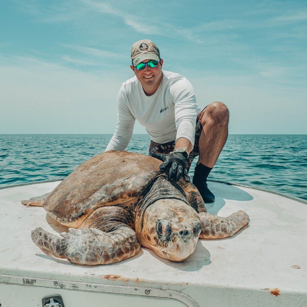 Dr. Matt Ware with a male loggerhead sea turtle
